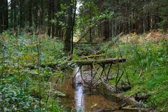 A picturesque stream in the forest. An old dead tree fell into a creek stock photography