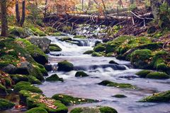 Picturesque stream in wood Stock Photography