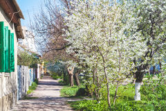 Picturesque street along single-storey houses and cherry blossom Stock Photo