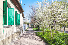 Picturesque street along single-storey houses and cherry blossom Stock Photography