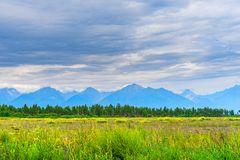 Picturesque summer landscape of mountain range with peaks, valley with green grass, grove and cloudy sky. Natural background with. Space for text. Eastern Sayan royalty free stock images
