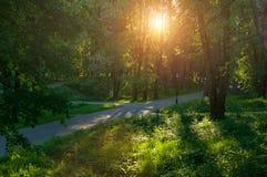 Sunny summer landscape - summer park alley under soft sunset light Stock Image