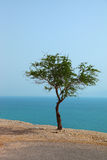 Picturesque tree above Dead Sea Stock Photos