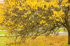 Picturesque tree with autumn leaves in the park Stock Photo