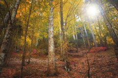 Colorful autumnal forest in the mythical Mount Olympus - Greece stock photo