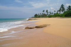 Picturesque  tropical beach. Sri Lanka Royalty Free Stock Image
