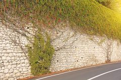 The picturesque Twisting Tree or Shrub grows and winds over the Stone Old Wall in the City of Taormina. The island of Sicily,. Italy royalty free stock images