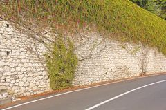 The picturesque Twisting Tree or Shrub grows and winds over the Stone Old Wall in the City of Taormina. The island of Sicily,. Italy royalty free stock photo
