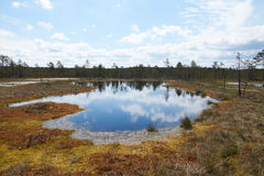 The picturesque view on big lake of the Viru Raba bog in Estonia. In summer day Stock Image