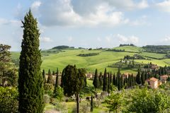 Lush, green hillside with cypress trees in the Val D`Orchia, Italy. stock photo