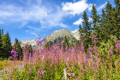 Picturesque view of Tatra mountains, Slovakia Stock Image