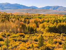 Aspen groves of the Sierra Nevada mountainside in early October stock photography