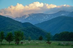 A picturesque view to a mountain area with some greeness and animals.  Royalty Free Stock Images