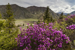 Picturesque views of the Altai mountains Stock Photo