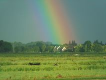 Detail of a very bright double rainbow in the open dutch landscape called The Green Heart of Holland. royalty free stock photo