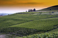 Picturesque vineyard. Scenic view of picturesque Barbera grapes vineyard at sunset Asti, Piedmont, Italy Stock Image