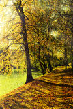 Picturesque walkway in autumn park with rays of soft light. Royalty Free Stock Images