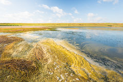 Picturesque wetland in the summer season Royalty Free Stock Photography