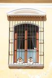 Picturesque window in Antigua Guatemala Royalty Free Stock Photos