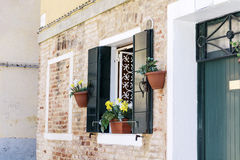 Picturesque window with green shutters and pot  flowers Stock Image