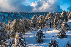 Picturesque winter landscape and blue sky. Troodos Mountains, Cy Royalty Free Stock Image