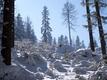 Picturesque winter landscapes of mountain landscapes in sunny light royalty free stock photo