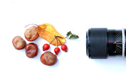 Picturing autumn. Picture of a lens picturing leaves, chetnhuts and rose hip Stock Images