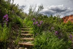 Picturque steps going up in the lash summer vegetation stock image