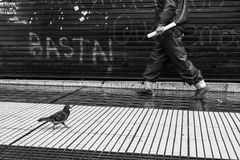 Pidgeon going to work. Street photography black and white. Man and pidgeon walking on the sidewalk stock photo