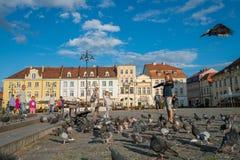 Pidgeons девушки подавая в старом городке в Bydgoszcz Стоковое Изображение