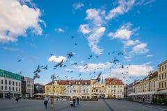 Pidgeons летая над старым городком в Bydgoszcz Стоковое Изображение RF