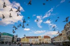 Pidgeons летая над старым городком в Bydgoszcz Стоковая Фотография RF