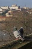 2 pidgeons на краю здания Стоковая Фотография RF