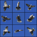 Pidgeons Стоковое фото RF