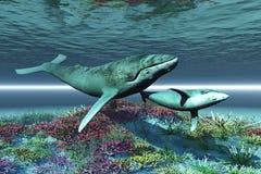 pieśniowy wieloryb ilustracja wektor