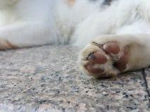 Pie de gato Foto de archivo libre de regalías