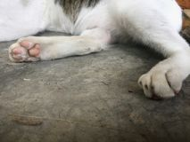Pie de gato en la planta del cemento imagen de archivo