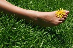 Pie de la hierba Fotografía de archivo libre de regalías