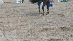 Pie del caballo que camina en la arena Ciérrese para arriba de las piernas que van en la tierra en el manege en la granja Siguien Fotos de archivo