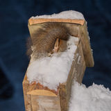 Pie del invierno Foto de archivo libre de regalías