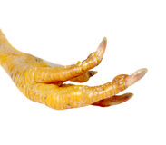 Pie del pollo Imagen de archivo libre de regalías