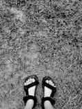 Pie en el fango Fotografía de archivo