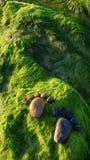Pie, guijarro, alga marina, arte, playa Foto de archivo