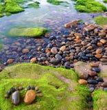 Pie, guijarro, alga marina, arte, playa Imagen de archivo