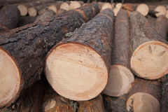 Pie Of Pine Logs Stock Photography