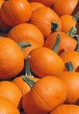 Pie Pumpkin Harvest Stock Image