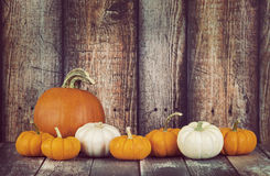Pie pumpkin and mini pumpkins in a row Royalty Free Stock Photo