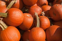 Pie Pumpkins Stock Image