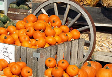 Pie Pumpkins For Sale at an outdoor Farmer's Market Royalty Free Stock Image