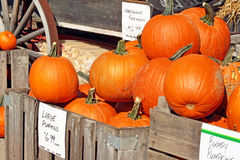 Pie Pumpkins For Sale at an outdoor Farmer's Market Stock Photos